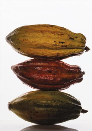 cabosses de cacao, Jean-Louis Bloch-Laine