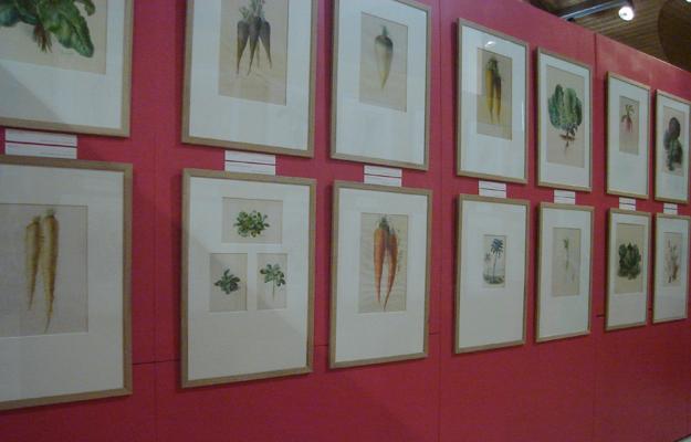 aquarelles exposition Vilmorin La Baule